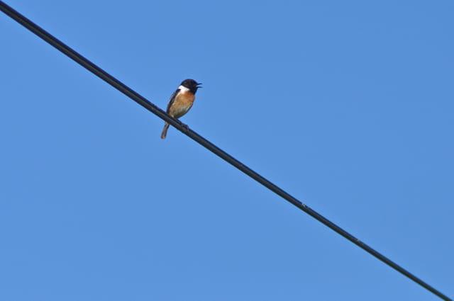 Chantes sur le fil...