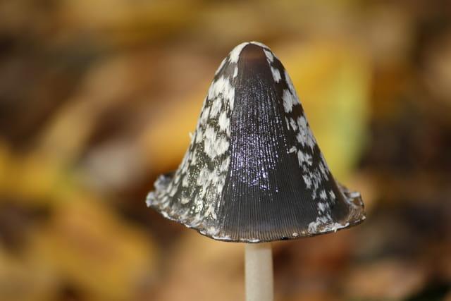 Chapeau de saison