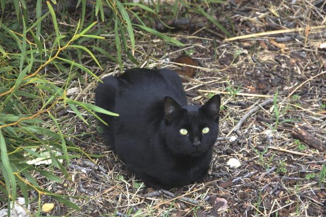 Chat à Albufeira