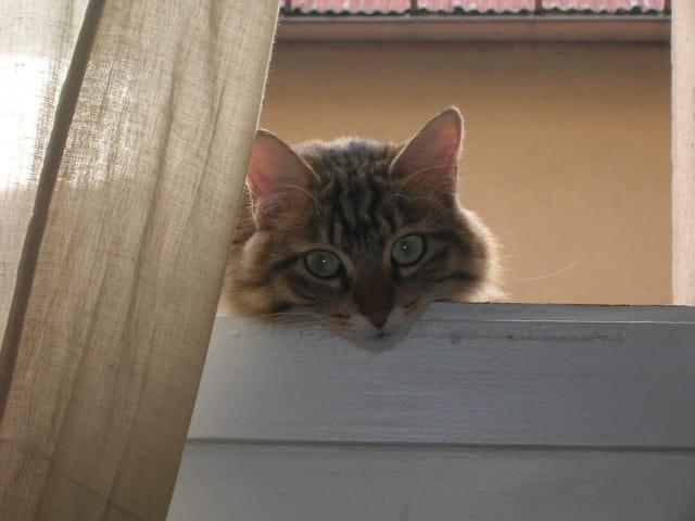 Chat... beauté!