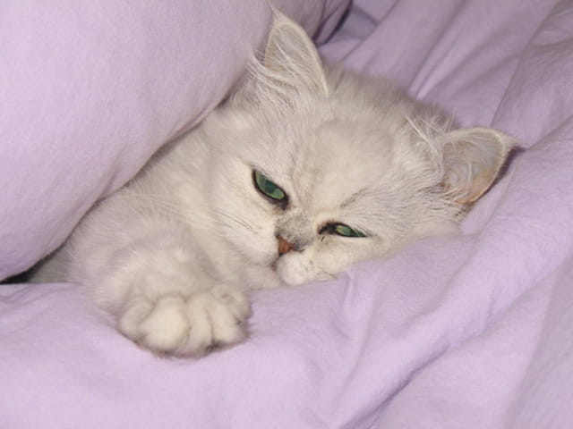 chat bien au chaud par astrid le minous sur l 39 internaute. Black Bedroom Furniture Sets. Home Design Ideas