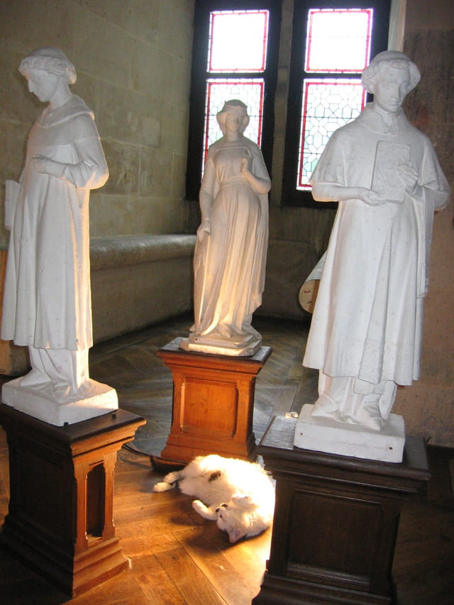 Chat blanc pour statues blanches