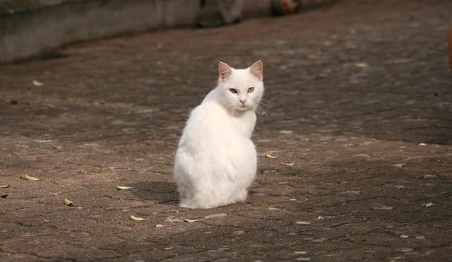 Chat blanc sur fond sombre