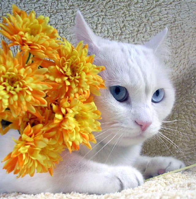 Chat dans fleurs.