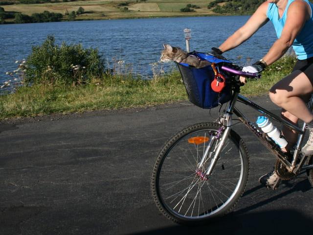 Chat décoiffe le vélo