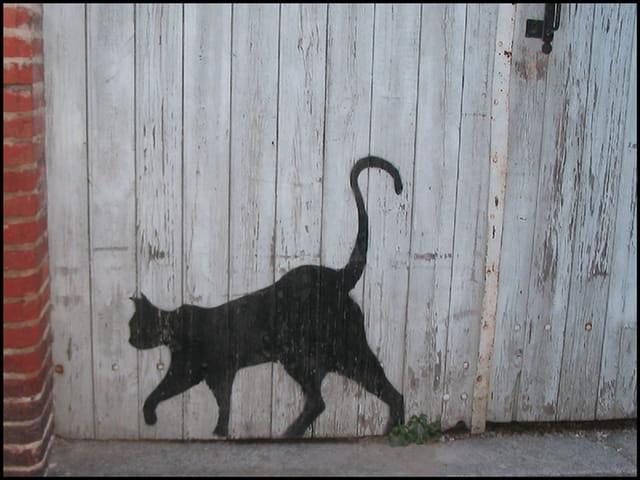Chat  en trompe-l'oeil