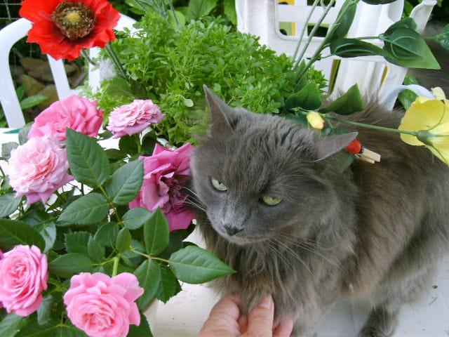Chat-fleur !