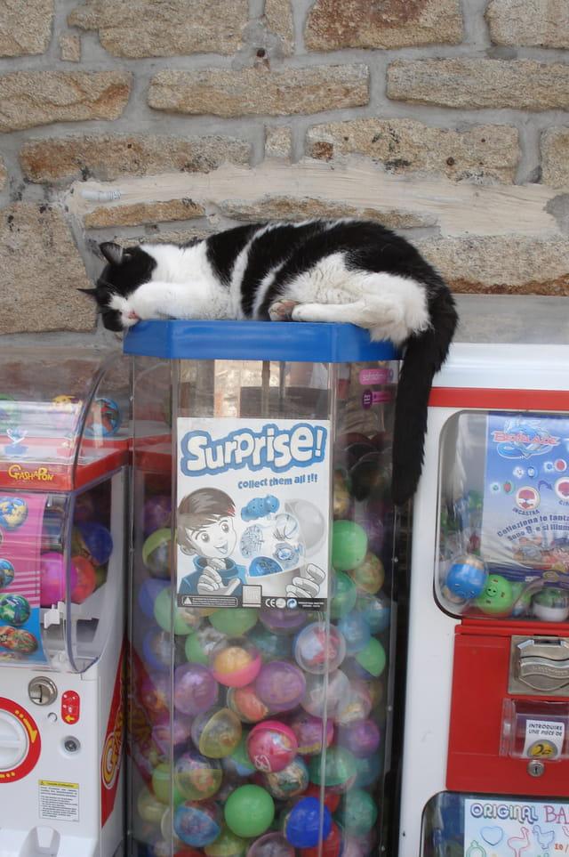 Chat gardien de bonbons