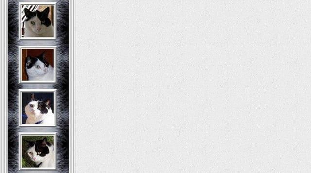 Chat lettre de pompon
