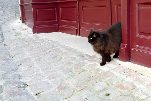 Chat solitaire