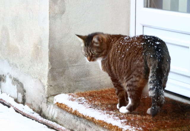 Chat-sse neige
