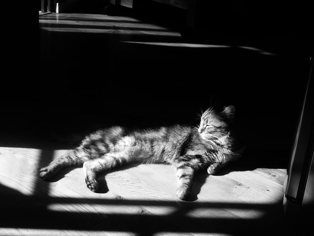 Chat tigré au soleil
