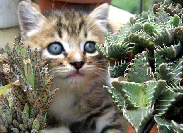Chaton et succulentes