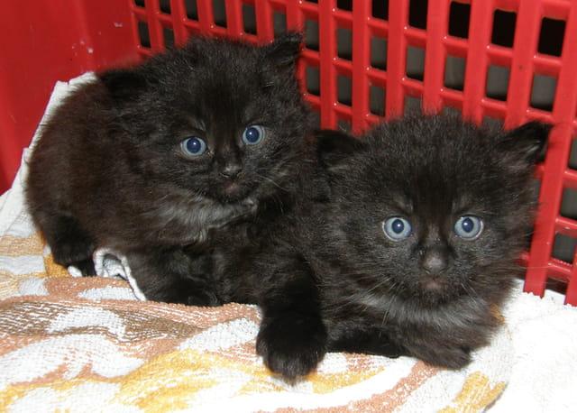 Chatons jumeaux abandonnés