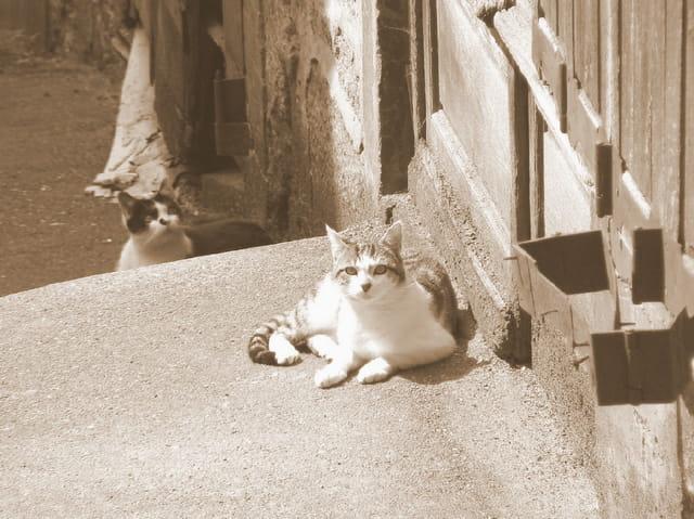 Chats des rues