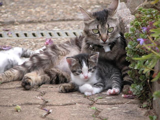 Chats, mère et fils
