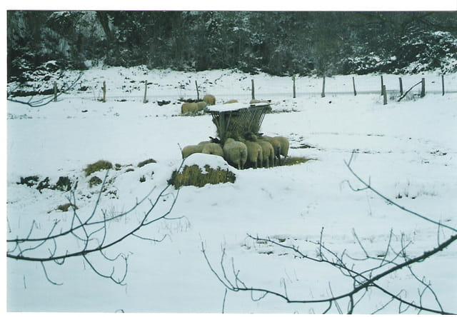 Chaud la laine de mouton