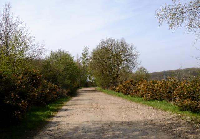 Chemin conduisant à la forêt - 2