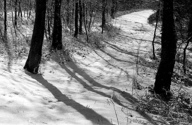 Chemin d'ombres et lumières