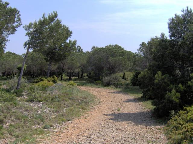 Chemin dans le massif