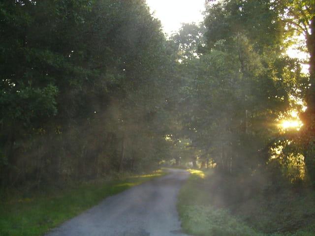 Chemin dans le soleil levant