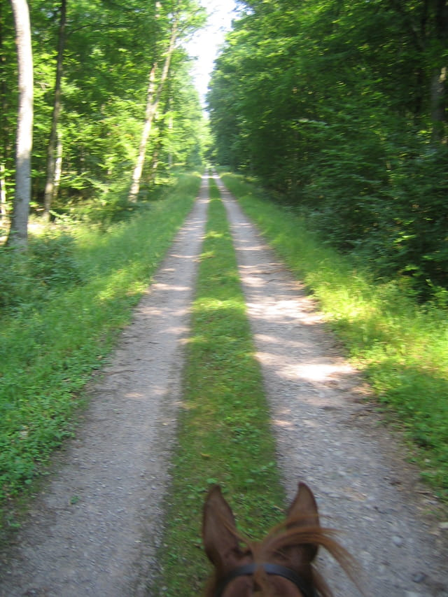 Chemin de Galop
