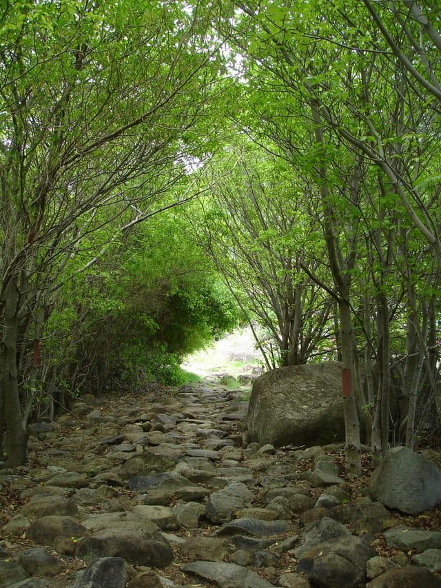 Chemin du Pain de Sucre