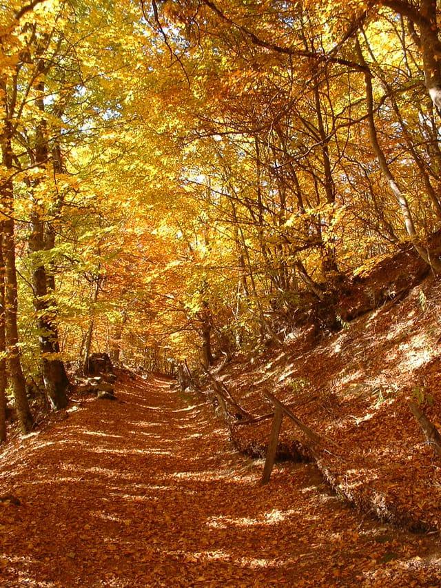 Chemin forestier alpin