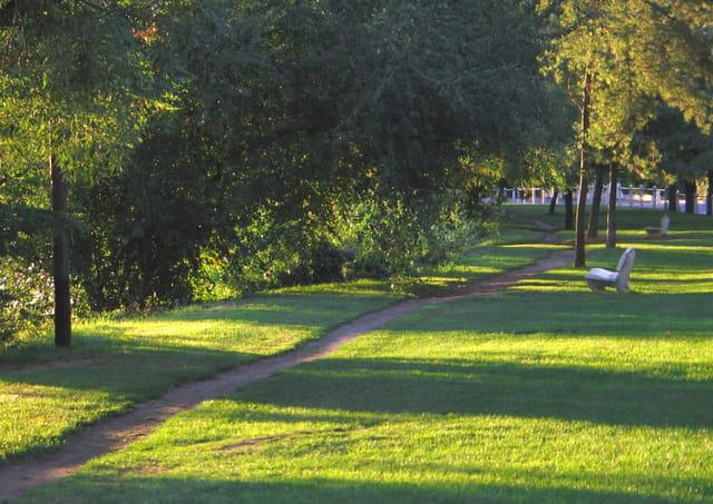 Chemin ombragé près du bord de Seine