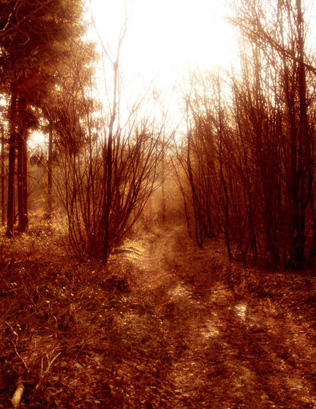 Chemins des bois rouges