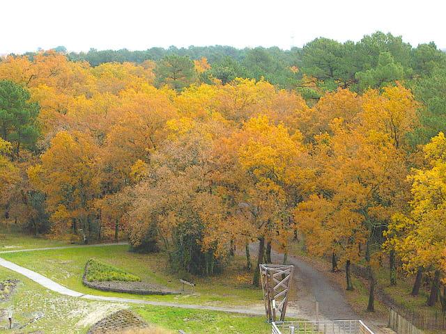 Chênes à l'automne