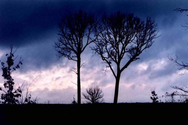 Chênes de tronçais