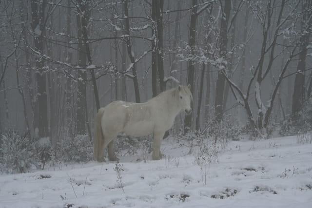 Cheval Blanc dans un monde blanc