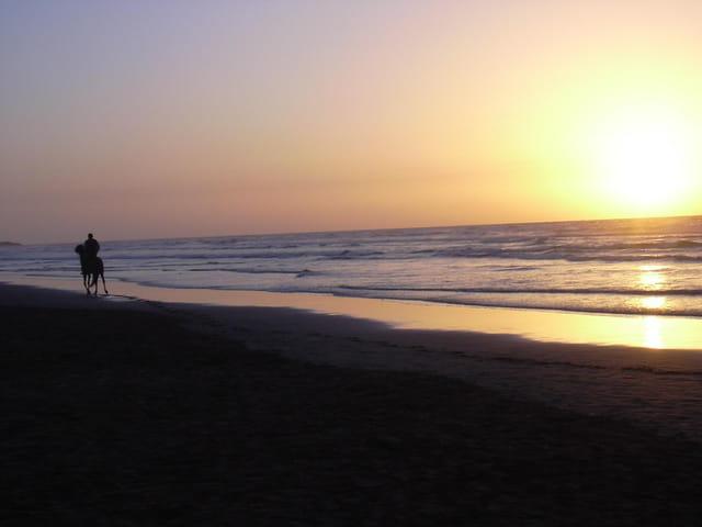 Cheval, mer et sunset