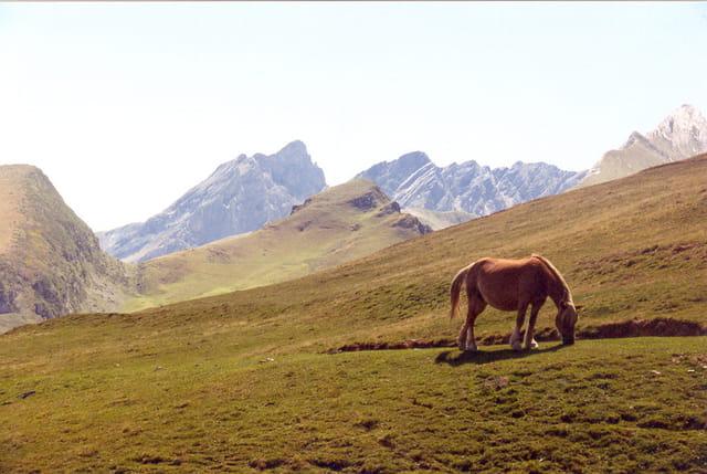 Cheval sur la montagne