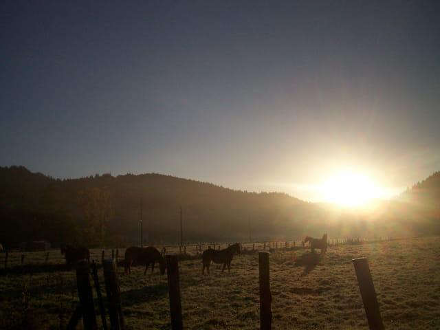 Chevaux au lever du soleil