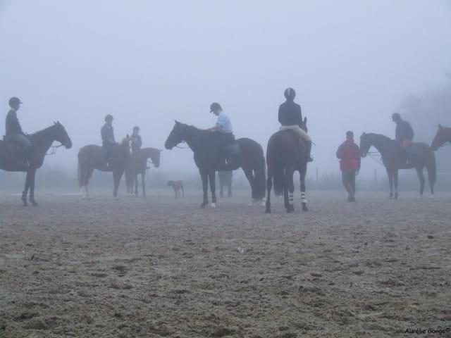 Chevaux et brouillard