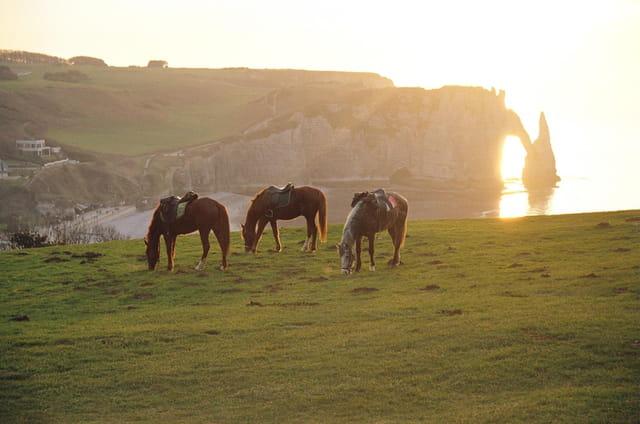 Chevaux sur coucher de soleil