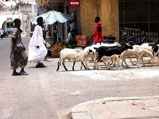 Chèvres de ville