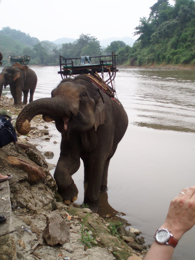 Chiang Rai, les éléphants nous attendent pour le tour dans la jungle