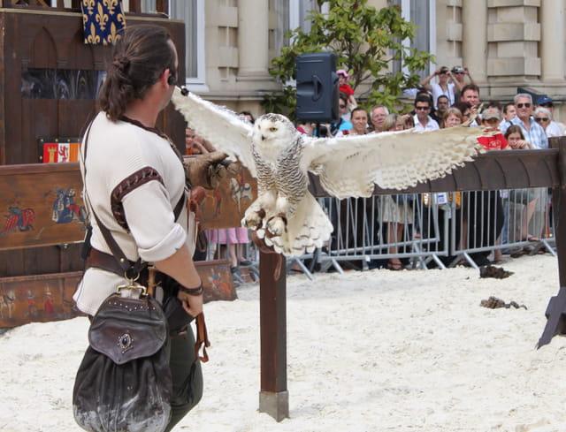 Chouette harfang en spectacle