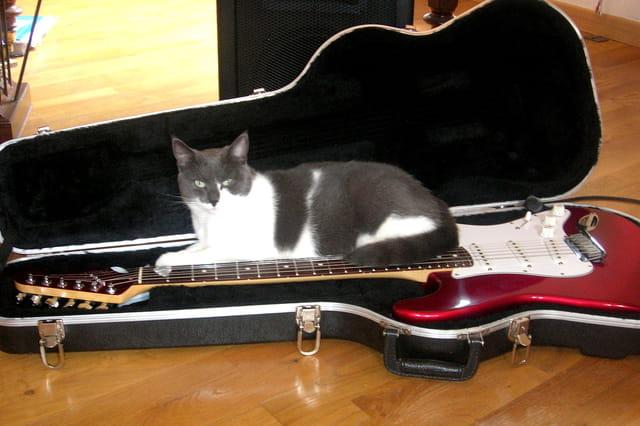 Choupette sur ma guitare....