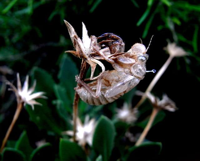 Chrysalide et fleurs
