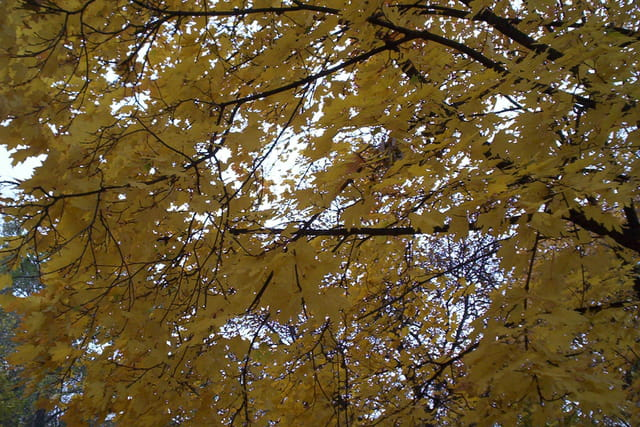 Ciel jaune