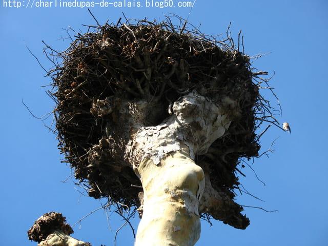 Cigogne 4 le nid