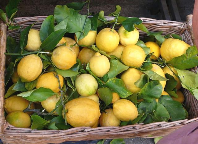Citrons locaux