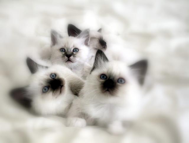 Ma petite Clochette et ses frères