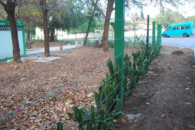 clôture de plantes grasses