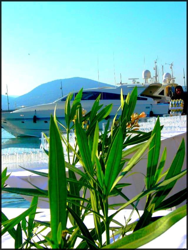 Cocktail entre yacht et olivier
