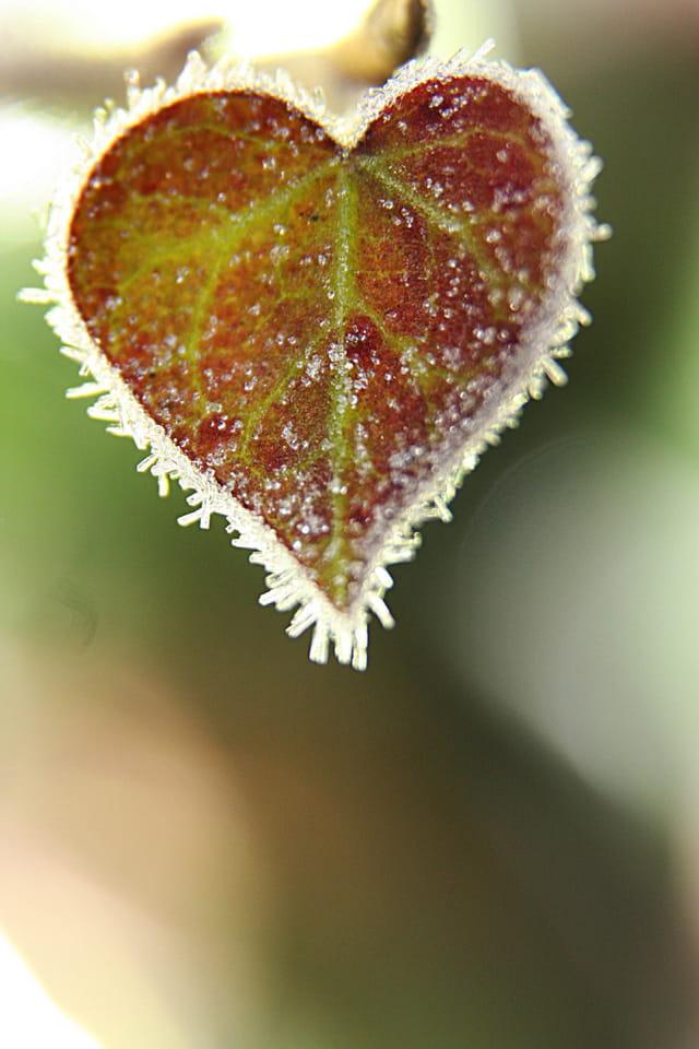 Coeur de givre2